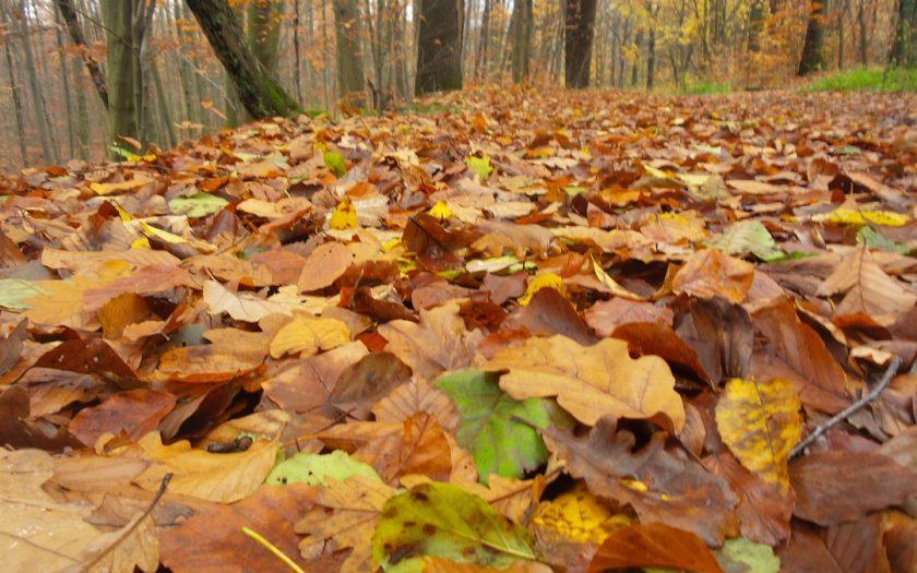 lehullott levelek